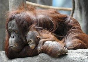 Ученые измерили скорость передвижения древних обезьян