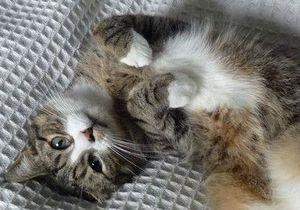 Пушистые хищники: коты убивают миллиарды животных