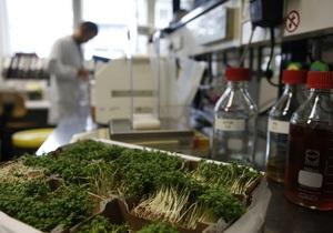 Эксперты: Зараженные E.coli семена могли быть завезены в Европу из Египта