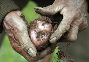 Дело: Украина начала импорт картофеля из Саудовской Аравии
