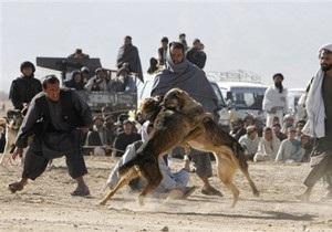 В Афганистане террорист-смертник взорвал бомбу во время собачьих боев: есть жертвы