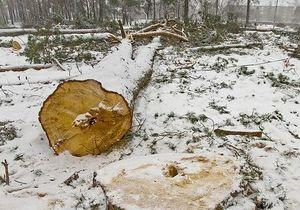 Киевский депутат обеспокоен вырубкой Святошинского леса