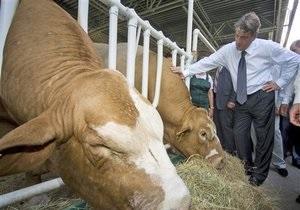 Ющенко обеспокоился ситуацией в животноводческой отрасли