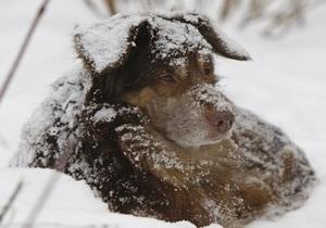 новости Киева - убийство собак - В Киеве милиция проводит расследование по факту убийства собаки и шести щенков