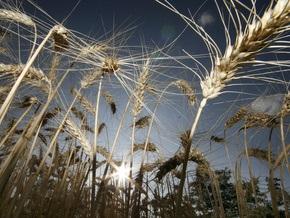 Украина собрала 44,8 млн т зерновых