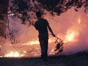В трех областях Украины вспыхнули лесные пожары