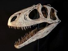 Новый вид динозавра открыл некоторые секреты эволюции птиц