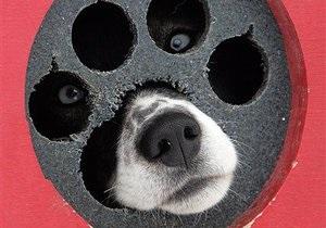Киевские власти выделят на стерилизацию бездомных животных 15 млн гривен