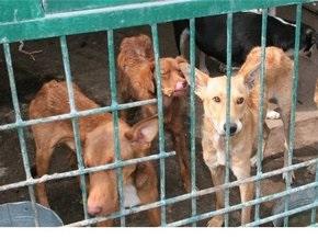Сегодня у здания Киевсовета пройдет митинг защитников животных