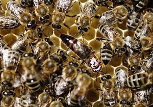 Жителя Винницкой области до смерти закусали пчелы