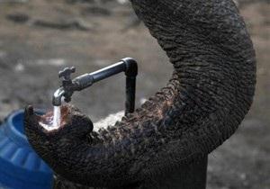 Зоопарк в США закрыл вольер со слоном, убившим свою смотрительницу
