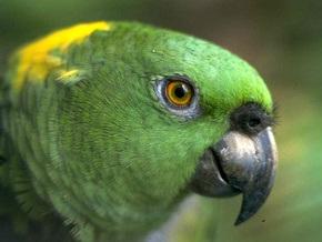 Попугай Вилли награжден за спасение жизни ребенка