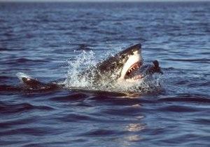 В Приморье акула откусила руки отдыхающему
