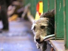 СМИ: Бездомные собаки в московском метро становятся все умнее