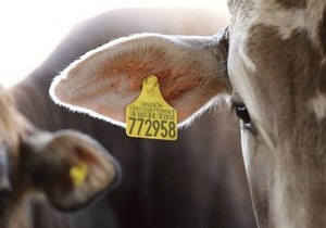 США могут прекратить экспорт свинины и говядины в Россию
