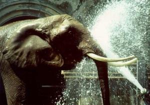 В немецком зоопарке умерла самая старая в Европе слониха