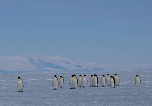 К вечным льдам. Туристы осваивают Антарктику