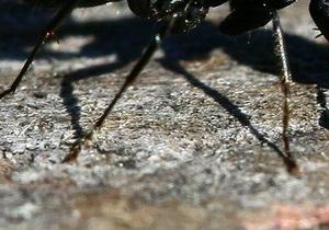 В Херсонской области на двух человек напали ядовитые насекомые