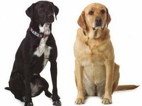 Исследования показали, что собаки умеют завидовать