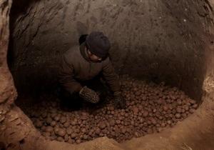 Картофель в Украине подорожает на 50% - эксперт