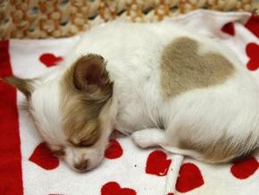СМИ: Киевляне просят ветеринаров уберечь их питомцев от гриппа