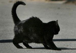 Во Львове кошка помогла задержать вора