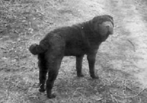 В Одесской области пес Тайсон спас своих хозяев во время пожара