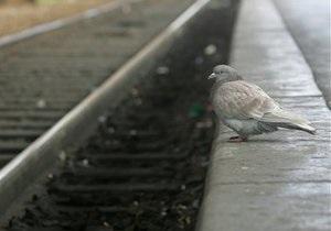 В Киевской области незаконно демонтировали более 600 метров железной дороги