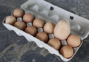 В ОАЭ из куриного яйца вылупилась дрофа