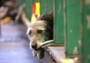 В Киеве бездомных животных не будут отлавливать до конца зимы