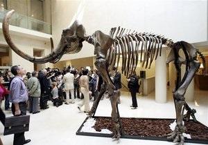 В метрополитене Дюссельдорфа обнаружили бивень мамонта