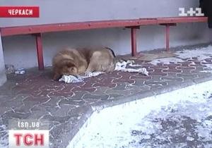 В Черкассах пес пять лет ждет своего хозяина на остановке