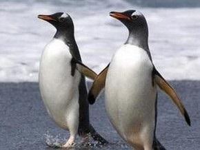 Пингвины геи распалась