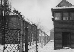 Еврейские организации сорвали распродажу колючей проволоки из нацистского концлагеря