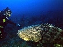 В Тихом океане обнаружен новый вид рыб-гигантов