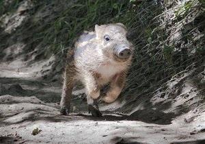 В Техасе началась кампания по отстрелу диких свиней