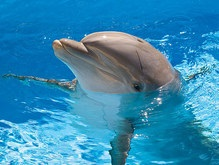 Планета теряет 2 триллиона евро ежегодно из-за уничтожения животных