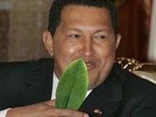 Чавес призывает жевать коку: оппоненты протестуют
