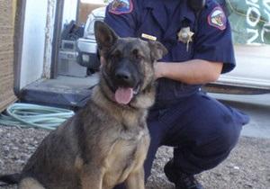 Американец облаял полицейскую собаку