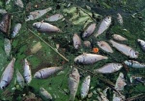 В Киевской области на реке Роська погибло 200 кг рыбы