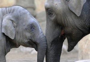 В Индии местные жители травят слонов ядом и убивают отравленными стрелами