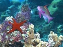 Большой Барьерный риф могут спасти только рыбы