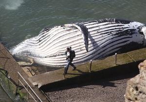В США на пляж выбросился 15-метровый кит