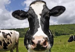 Новости Чехии - новости о животных: Движение по крупнейшей магистрали Чехии на два часа перекрыла корова