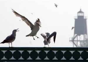 На острове в Азовском море нашли полторы тысячи мертвых птиц