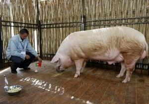 Ветеринары опасаются за здоровье хряка Фунтика