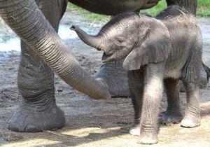 Новости США - новости о животных: Во Флориде слониха выбрала имя своему детенышу
