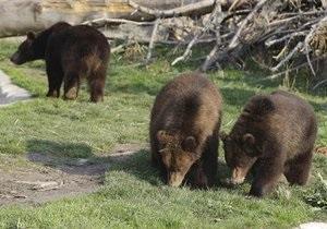 Новости сша - странные новости: В Калифорнии медведи забрались в дом местного жителя и съели всю еду