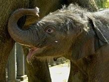 В Бангладеш слон затоптал человека
