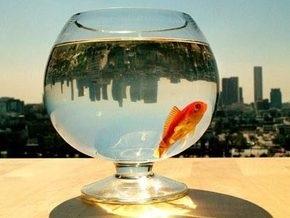 Ученые доказали, что рыб может укачивать